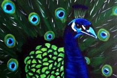 Peacock - NO LONGER AVAILABLE